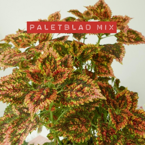 PALETBLAD MIX