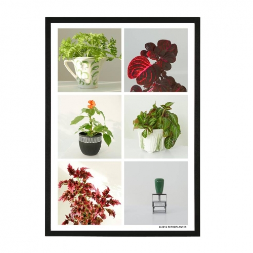 RETROPLANTER PLAKAT A3
